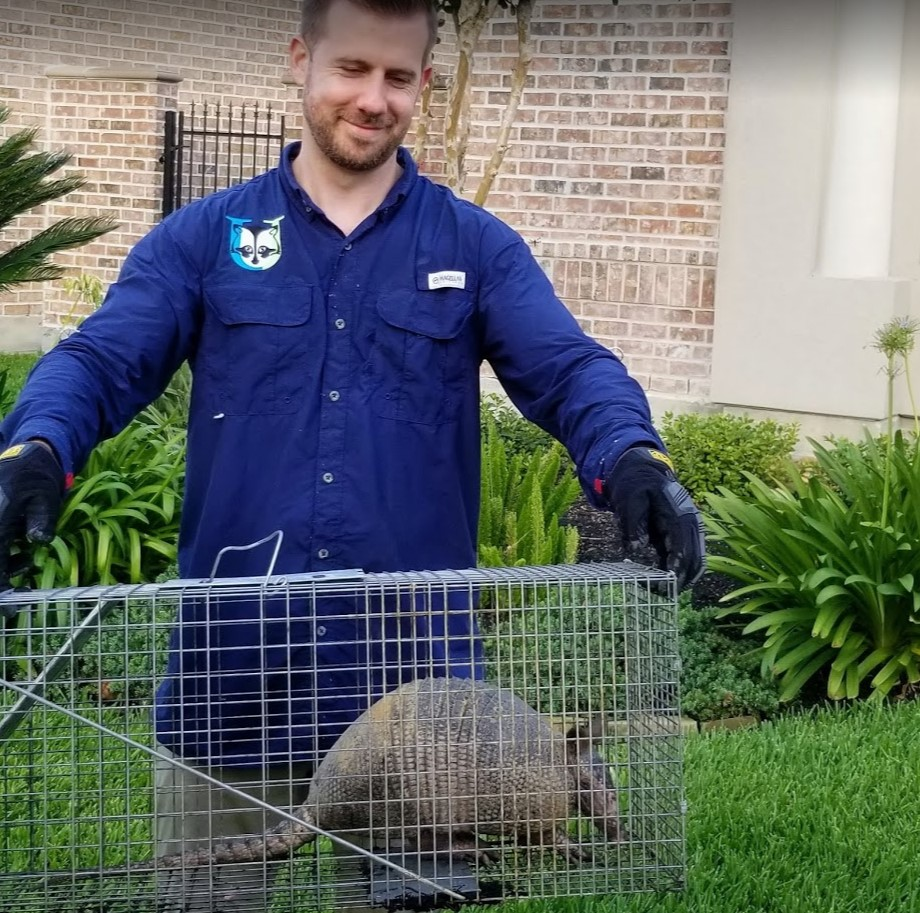 Man holding trapped armadillo in cage.